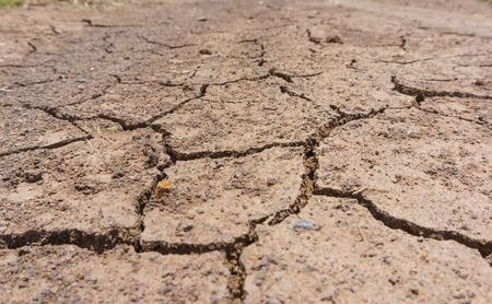 dry land: Dry land cracked