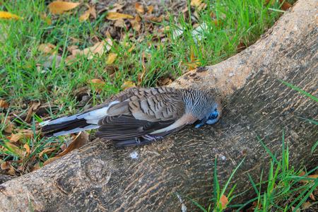 carrion: Carrion bird , bird deaths Stock Photo