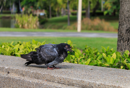 dying: sick birds, birds are dying