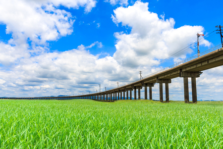 railway transportation: railroad for transportation, transport railway over rice field