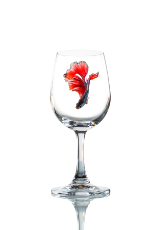 white wine: betta fish inside Empty wine glass isolated with reflect on white background