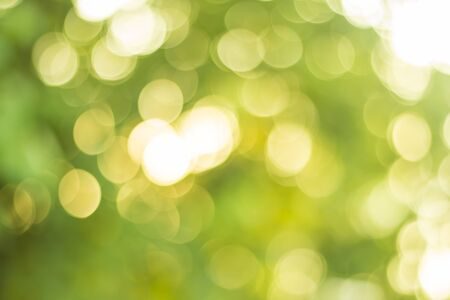 green nature bokeh background out of focus