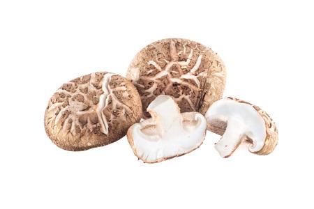 shitake: The Shitake mushrooms