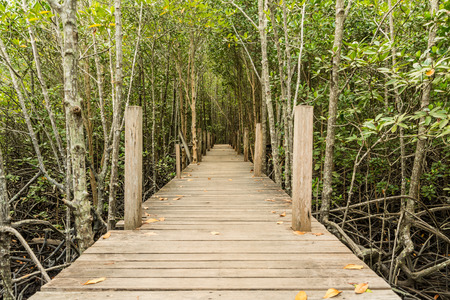 Mangrove forest in Rayong, Thailand