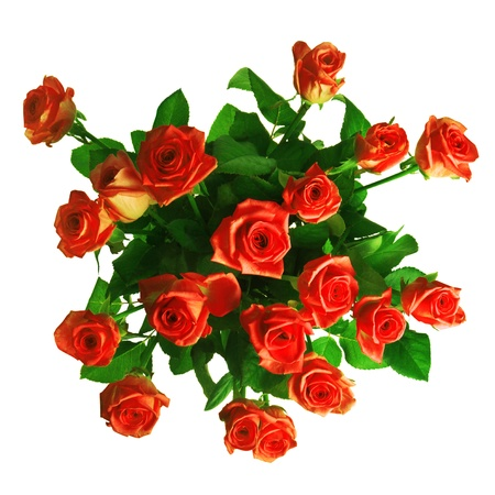 angle views: bouquet of red roses isolated on white background Stock Photo