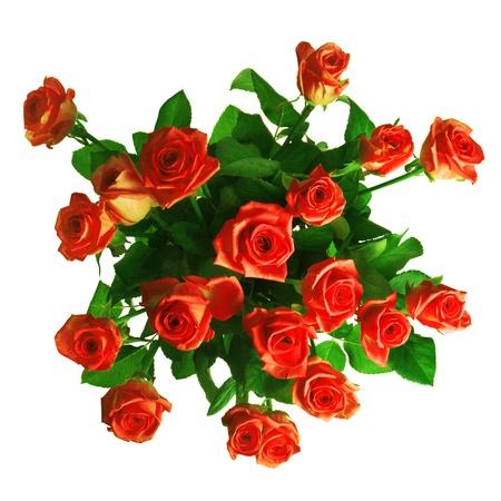 nineteen: mazzo di rose rosse isolato su sfondo bianco
