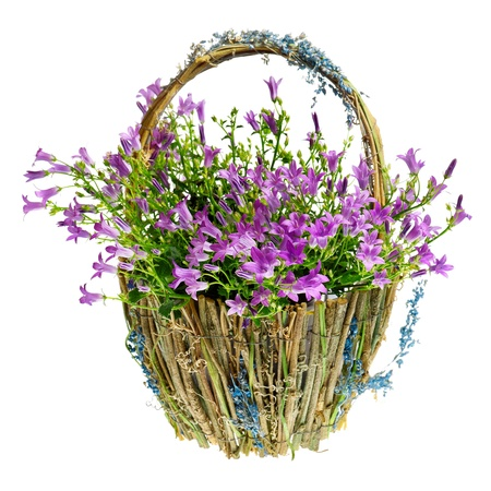 purple spring flowers in a basket Stock Photo - 13125721