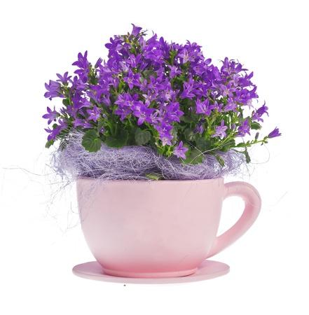 yellow tea pot: composition of kampanula flowers Stock Photo