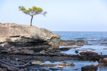 lone pine: Lone Pine en el acantilado