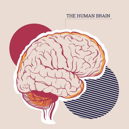 Vector illustration of an anatomical brain Stock Illustratie