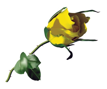 Beautiful yellow rose isolated on a white background Used mesh tool Vektoros illusztráció