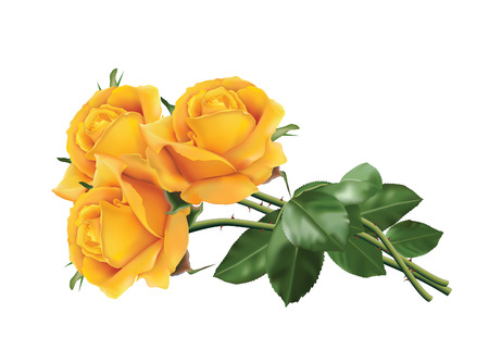 Three beautiful yellow roses isolated on the white background.