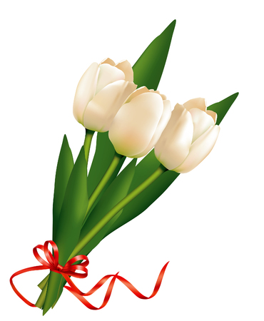 Beautiful bouquet of white tulips with red ribbon. Isolated on white background.
