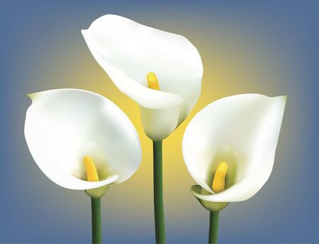Three calla lilies on a blue-yellow background.