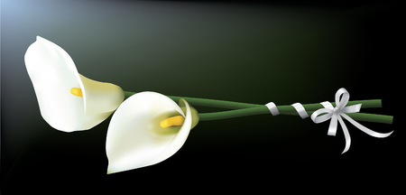 Bouquet of calla lilies isolated on a dark background.