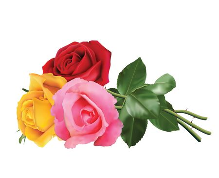 Tres hermosas rosas, rosadas, rojas y amarillas, aisladas sobre fondo blanco.