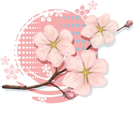 sakura flowers: Blossom Sakura Cherry  Illustration