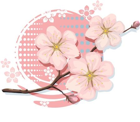 flor de sakura: Flor de cerezo Sakura Vectores