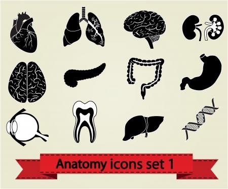 Menschliche Anatomie Symbole Teile Gehirn, Leber, Herz, Niere, Lunge, Magen, Auge und andere Set 1 Standard-Bild - 14751887