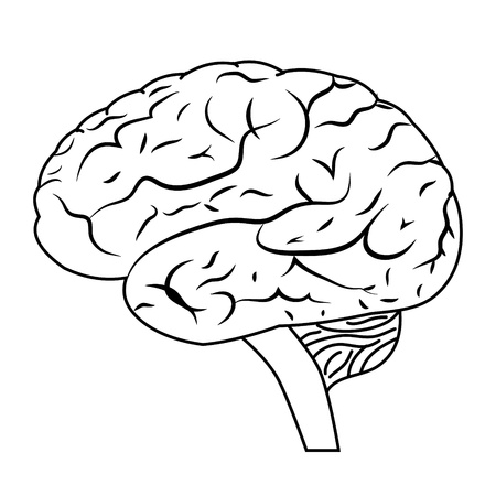 brain illustration: illustration of a human brain