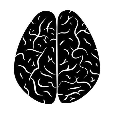 Vector illustration of a human brain  EPS 8 Stock Vector - 14825727