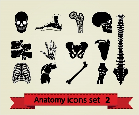Human anatomy icons parts Vector