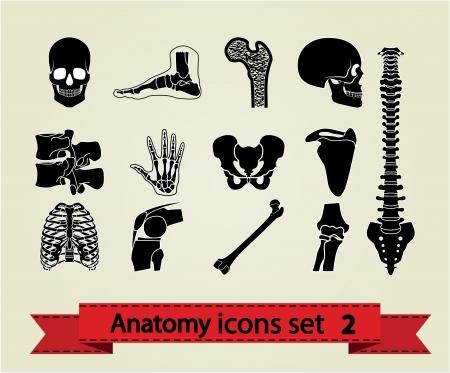 anatomie mens: Menselijke anatomie pictogrammen delen