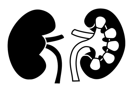 Human Kidney icon Stock Vector - 15329116