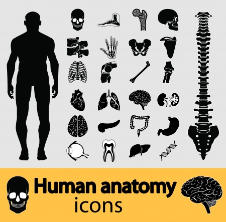 anatomy brain: Human anatomy black  Illustration
