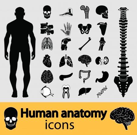 anatomie mens: Menselijke anatomie zwart Stock Illustratie