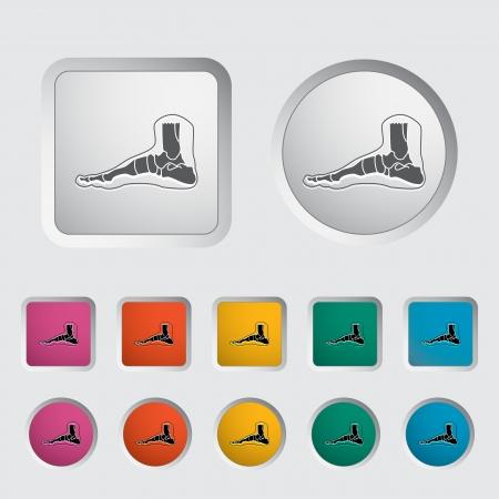 phalanx: Anatomia del piede icona illustrazione vettoriale Vettoriali