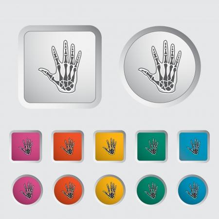 phalanx: Anatomia mano icona illustrazione vettoriale