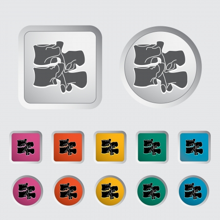 spinal disks: Anatomy spine icon. Vector illustration. Illustration