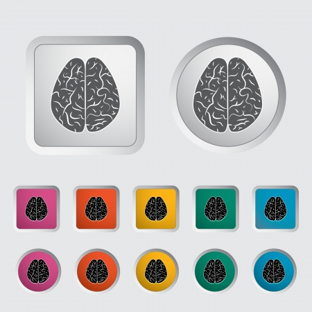 Vector illustration of a human brain  Stock Vector - 16785602