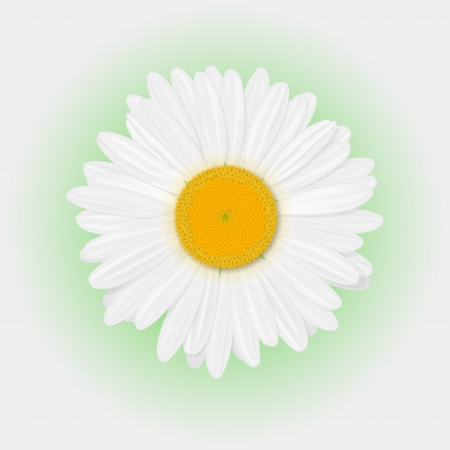 Isolated realistic daisy  chamomile  flower on a white background  Vector illustration Vector
