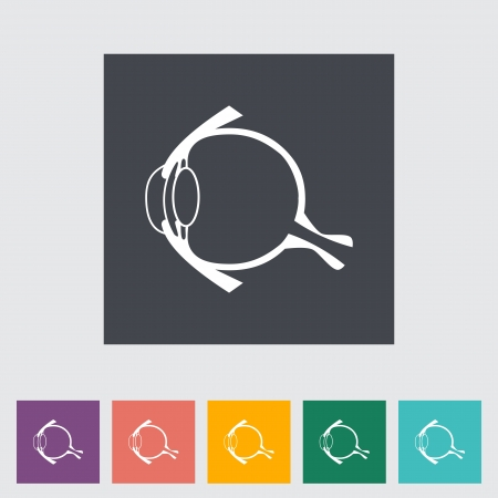 Anatomy eye flat icon. Vector illustration. Vector