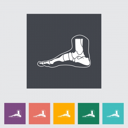 navicular: Foot anatomy flat icon. Vector illustration.