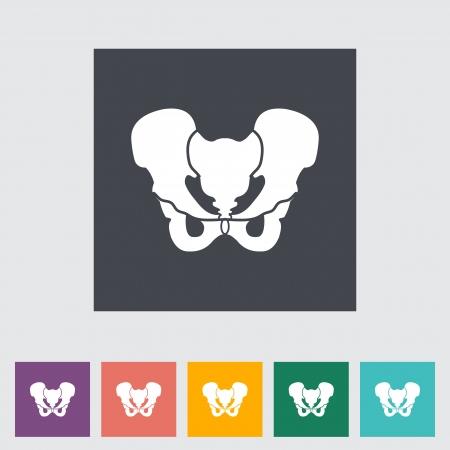 groin: Anatomy Pelvis flat icon illustration.