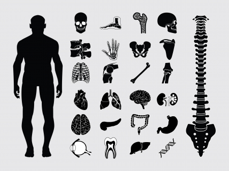 Human anatomy black & white icon set Vector