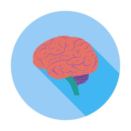 lobe: Brain