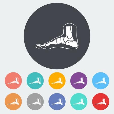 phalanx: Anatomia del piede. Singola icona piatto sul cerchio. Illustrazione vettoriale. Vettoriali