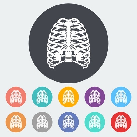 rib cage: Human thorax. Single flat icon on the circle. Vector illustration. Illustration