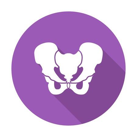 groin: Anotomy Pelvis. Single flat color icon. Vector illustration.