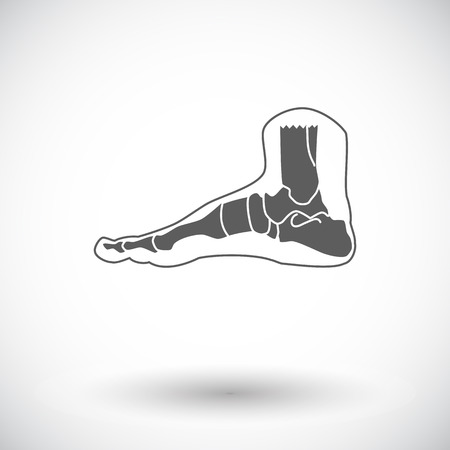shin bone: Foot anatomy. Single flat icon on white background. Vector illustration. Illustration