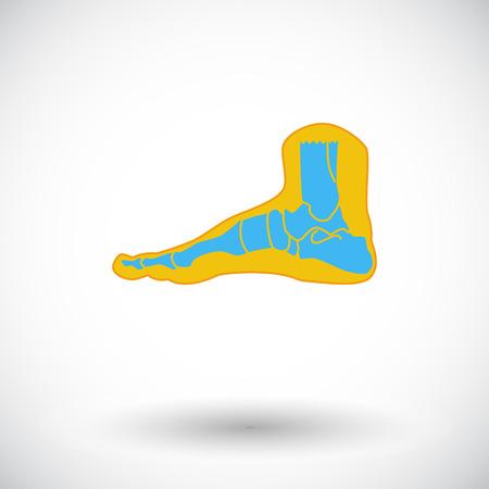 phalanx: Anatomia del piede. Singola icona piatto su sfondo bianco. Illustrazione vettoriale.