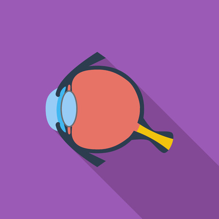 eye anatomy: Anatomy eye icon. Flat vector related icon with long shadow for web and mobile applications.