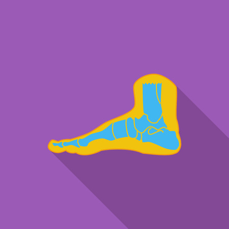 navicular: Foot anatomy icon. Flat vector related icon with long shadow for web and mobile applications.