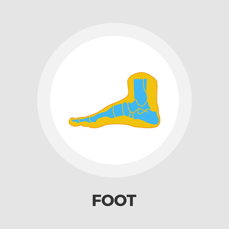 navicular: Foot anatomy icon vector. Flat icon isolated on the white background.