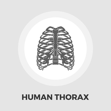 sternum: Human thorax icon vector. Flat icon isolated on the white background. Editable EPS file. Vector illustration.ground. Vector illustration.