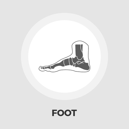 shin: Foot anatomy icon vector. Flat icon isolated on the white background. Editable EPS file. Vector illustration.